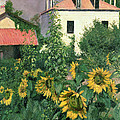 Sunflowers In The Garden At Petit Gennevilliers  by Gustave Caillebotte