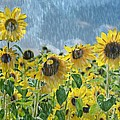 Sunflowers In The Rain by Maria Dryfhout