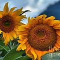 Sunflowers In The Wind by Adam Jewell