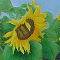 Sunflowers In The Wind Colorful Original Sunflower Art Oil Painting Artist K Joann Russell           by K Joann Russell