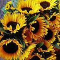Sunflowers by Mimi Saint DAgneaux