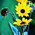 Sunflowers Portrait by Karen Majkrzak