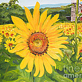 Sunflowers - Red Barn - Pennsylvania by Jan Dappen