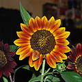 Sunflowers by Robert Floyd