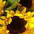 Sunflowers Tall by Amy Vangsgard