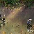 Sunglow Heron by Scott Hervieux
