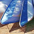 Sunkissed Sailfish by Cindy Greenstein