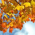 Sunlight And Shadow - Autumn Leaves Two by Miriam Danar