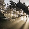 Sunlight Breaks Through The Fog by Robert L. Potts