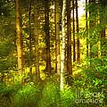 Sunlight Forest by Lutz Baar
