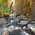 Sunlight Over Rocky Andreas Creek In Indian Canyons-ca by Ruth Hager