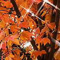 Sunlight Through The Leaves by Mick Anderson