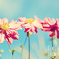 Sunlit Anemone Flowers With Cross Processed Effect by Natalie Kinnear