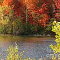 Sunlit Autumn by Ann Horn