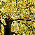 Sunlit Autumn Tree by Natalie Kinnear