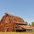 Sunlit Barn by Sue Smith