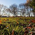 Sunlit Fall Lawn by Jannis Werner