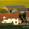 Sunlit Farm by Ann Horn
