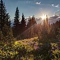 Sunlit Flower Meadows by Mike Reid