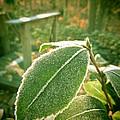 Sunlit Freeze by Penny Parrish