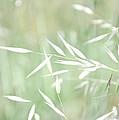 Sunlit Grass by Margaret Pitcher