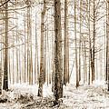 Sunlit Hazy Trees In Neutral Colors by Natalie Kinnear