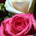 Sunlit Roses by Marie Hicks