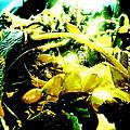 Sunlit Seaweed by Steve Taylor