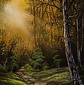 Sunlit Trail by Chris Steele