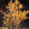 Sunlit Tree In Palo Duro Canyon 110213.06 by Ashley M Conger