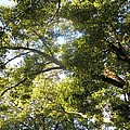 Sunlit Tree Tops by Leanne Seymour