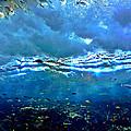 Sunlit Wave by Dan Sproul