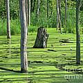 Sunlit Wetland by Ann Horn