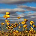 Sunlit Yellow Wildflowers by Valerie Loop