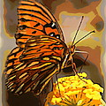 Sunlite Orange Butterfly by Sheri McLeroy