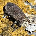 Sunning Stinkbug by Doris Potter
