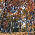 Sunny Autumn Day 3 by Cedric Hampton