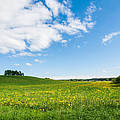 Sunny Day At The Fields Of Gold by Ismo Raisanen