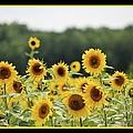 Sunny Days 8466 by Bonfire Photography