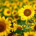 Sunny Delight by Bill Pevlor