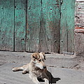 Dog Enjoying A Sunny Doorstep by James Brunker
