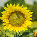 Sunny Face by Terry Rowe