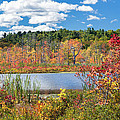 Sunny Fall Day by Bill Wakeley