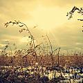 Sunny Field by Felix Laliberte
