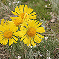 Sunny Flowers by Gregory Yost