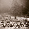Sunny Frosty Douglassville by Trish Tritz