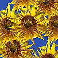 Sunny Gets Blue by John Haldane