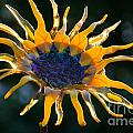 Sunny Glass by Susan Herber