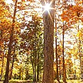 Sunny Hardwoods by Michael Tidwell