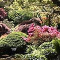 Sunny Japanese Garden by Carol Groenen